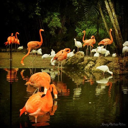 florida woods photo