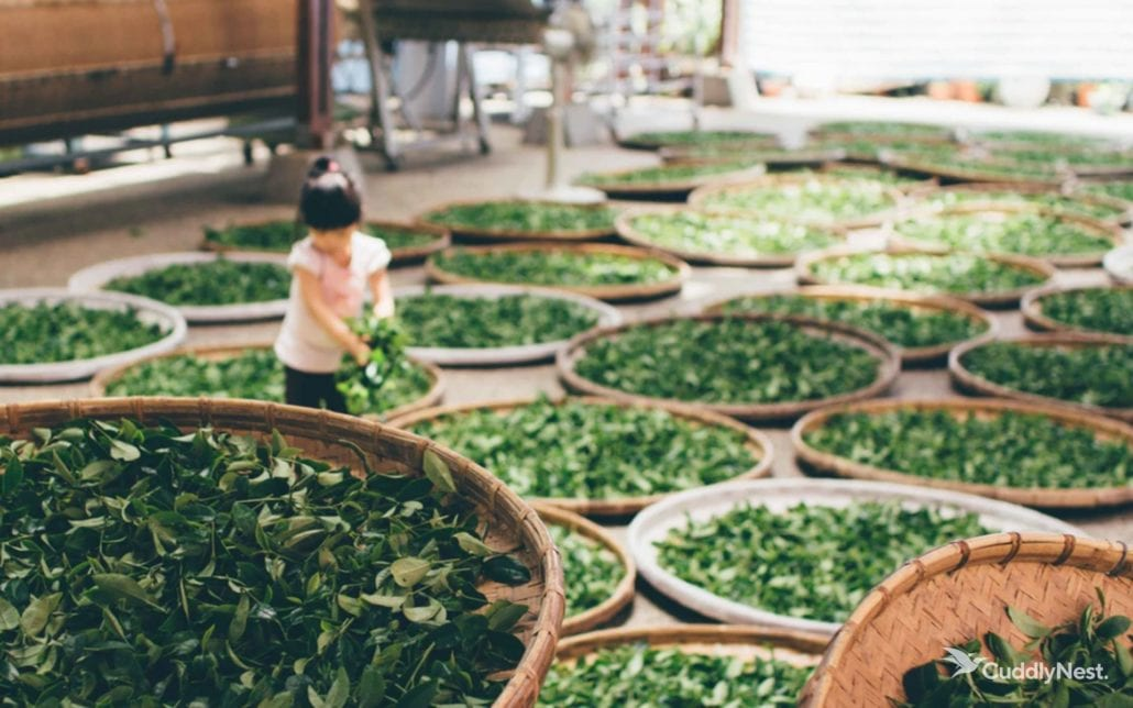 Japan Tea Houses 2020