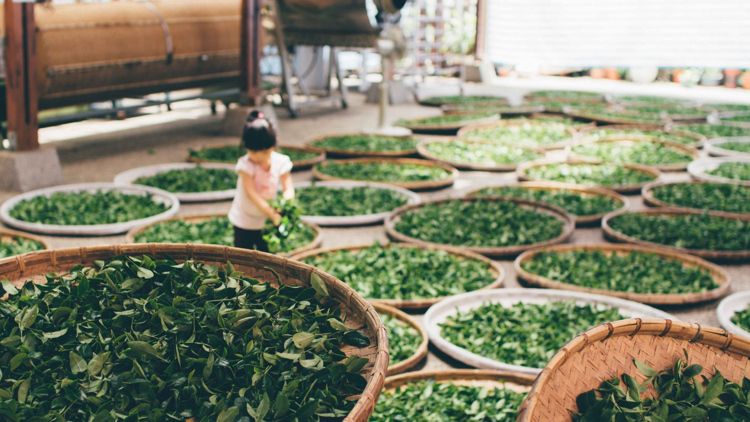 All You Need to Know about Japanese Tea Traditions Before Travelling to Kyoto