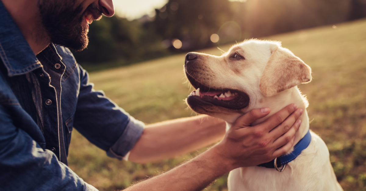 8 Countries That Boost Pet-Friendly Travel