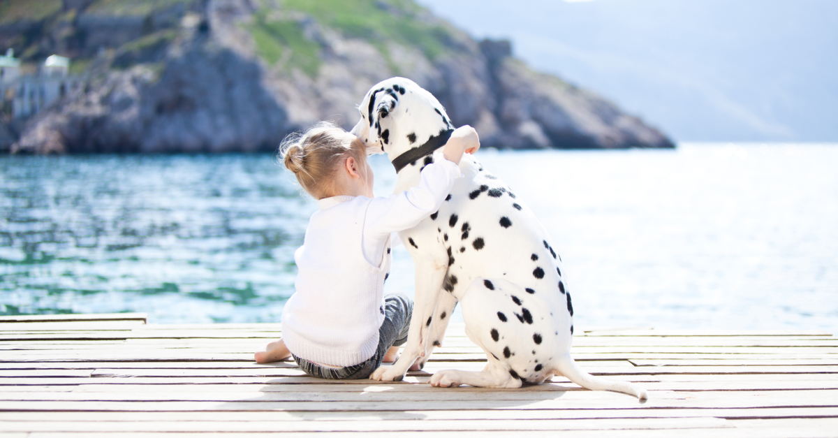 dalmatian dog and child in croatia
