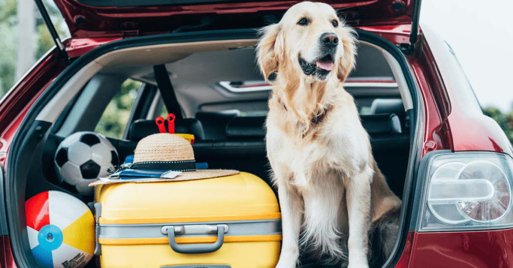pet-friendly trips