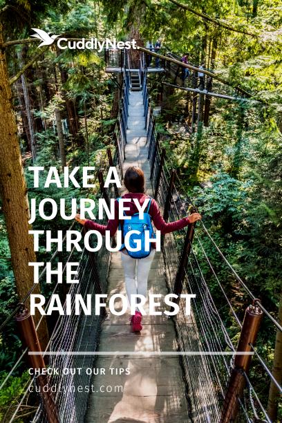 explore the amazon rainforest