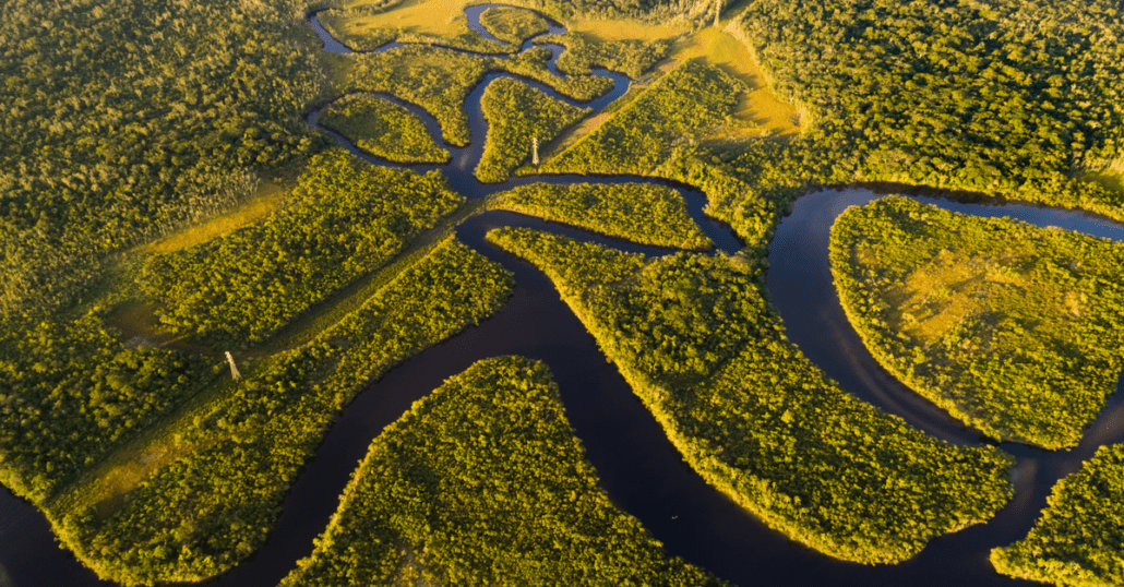 view of the amazon rainforest
