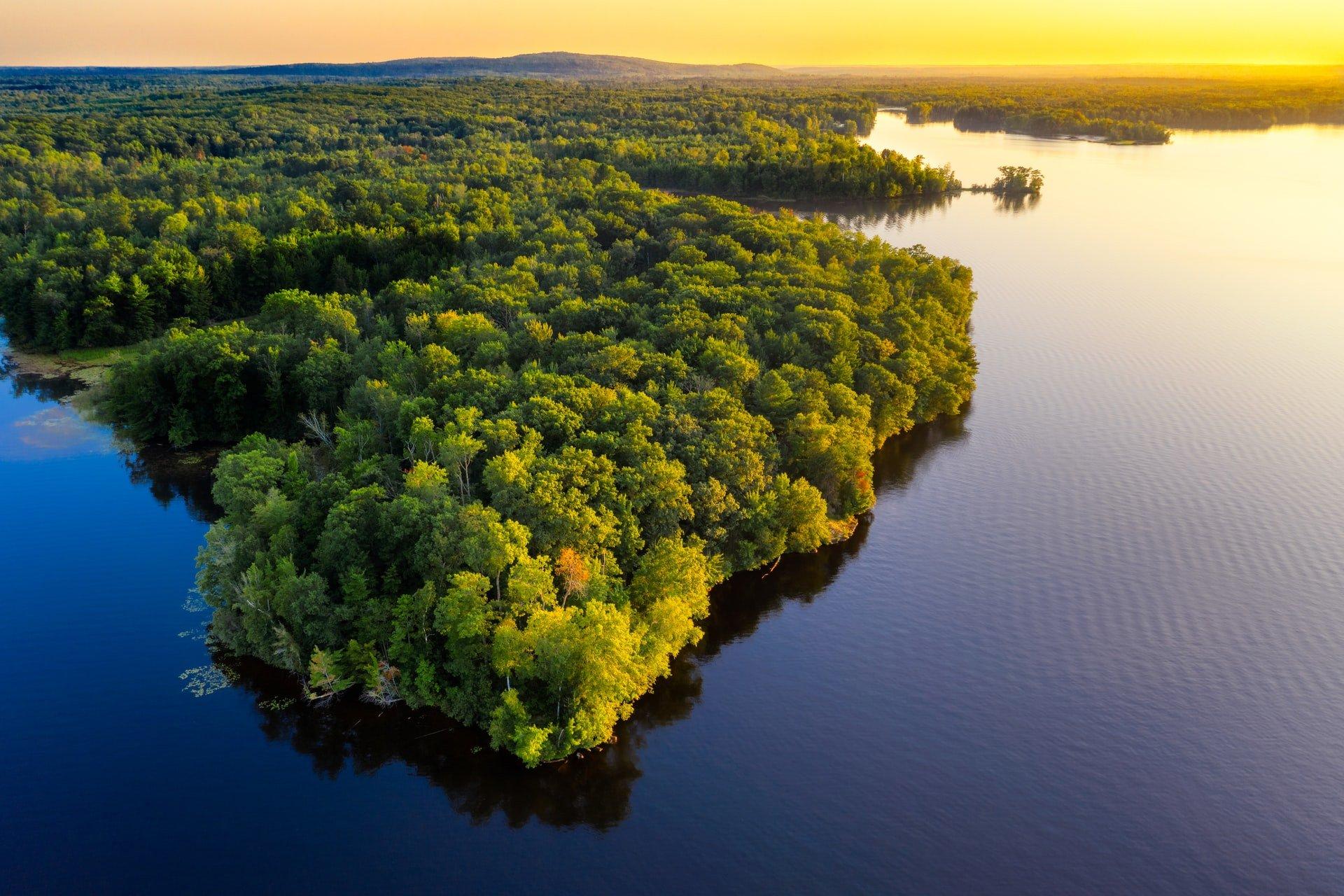 world rainforest day amazon