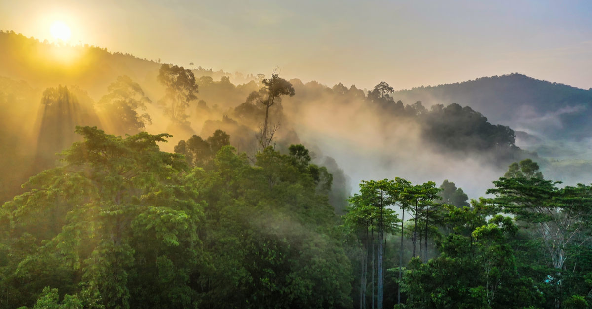 7 Things You Can Do To Save The Rainforest