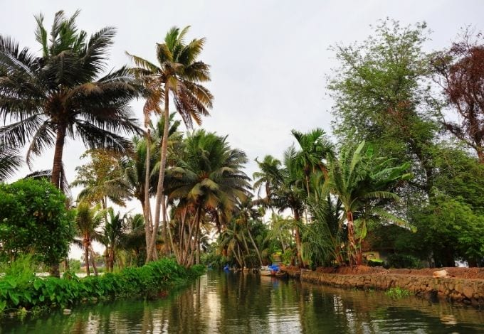 The Allepey canal, in India, lined with palm trees.