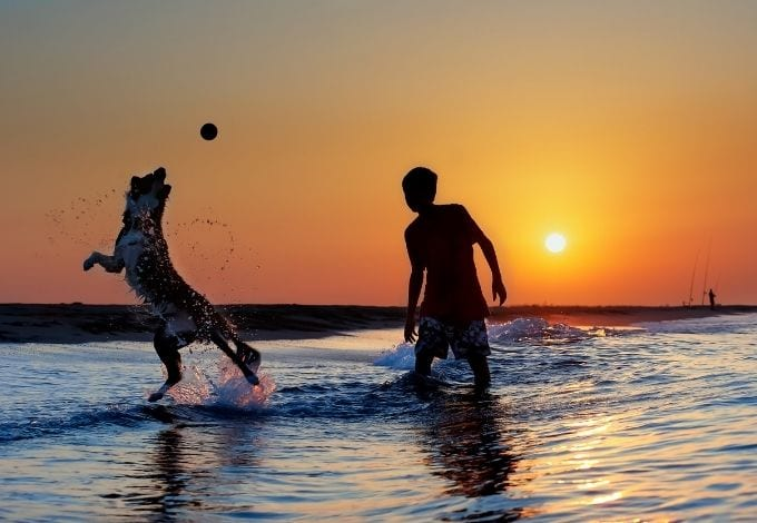 A dog jumping on the sea while playing with a kid during the sunset.