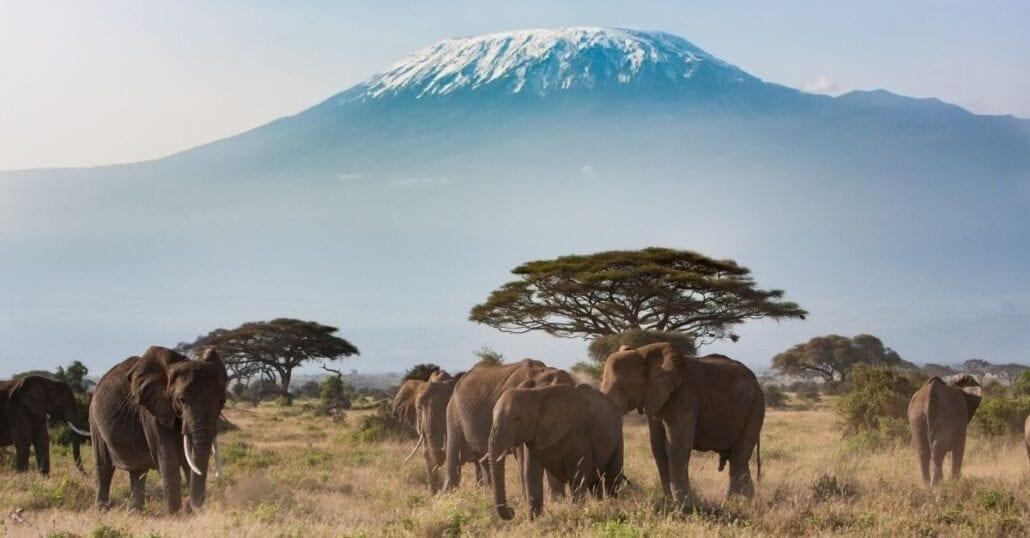 Elephants at a savannah in Tanzania.