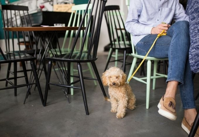 A small dog with a leash near his owner inside a restaurant.