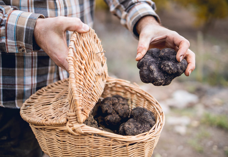 A man holding a basket filled wih black truffles.