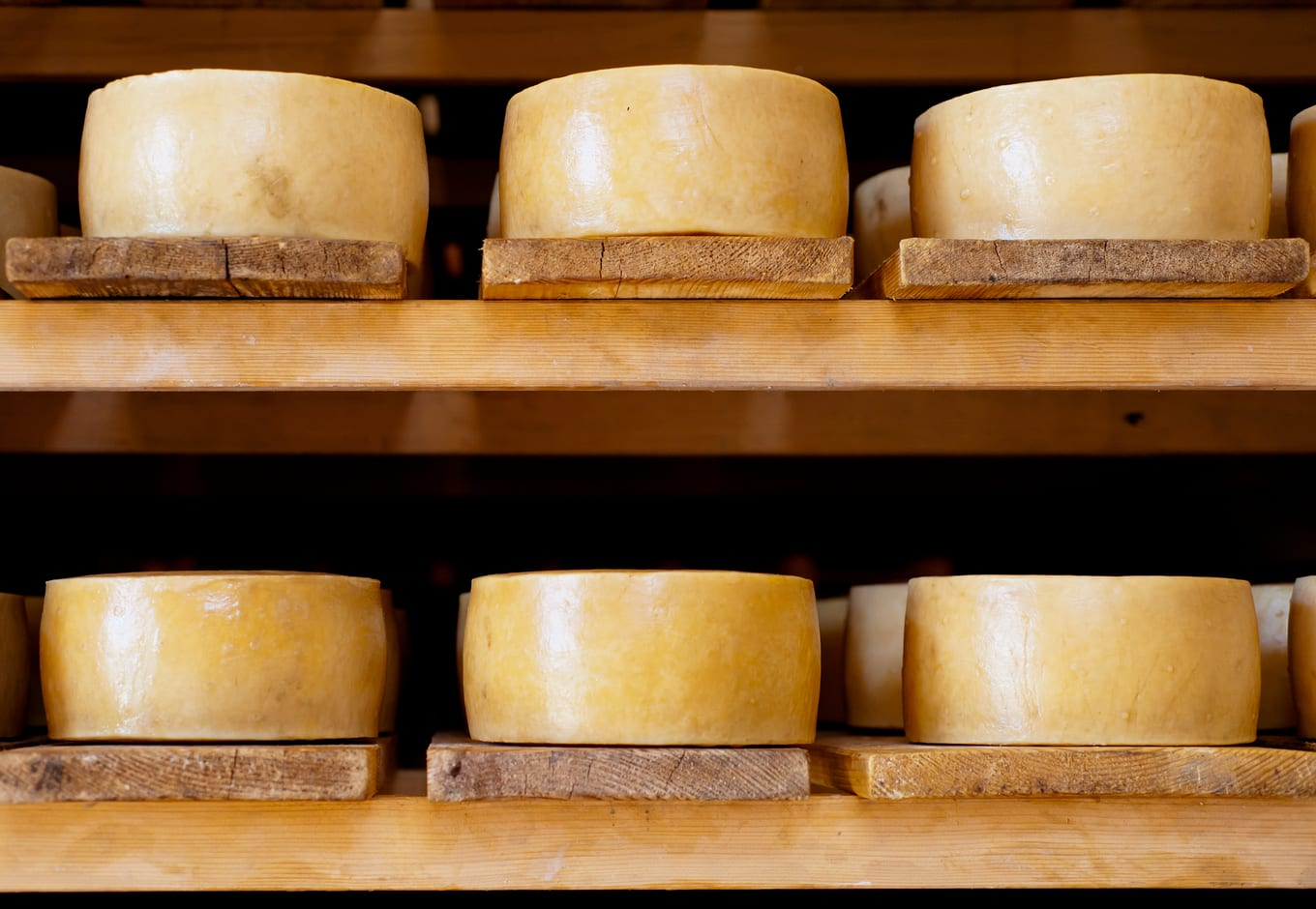 Croatian Pag cheeses on the shelves.