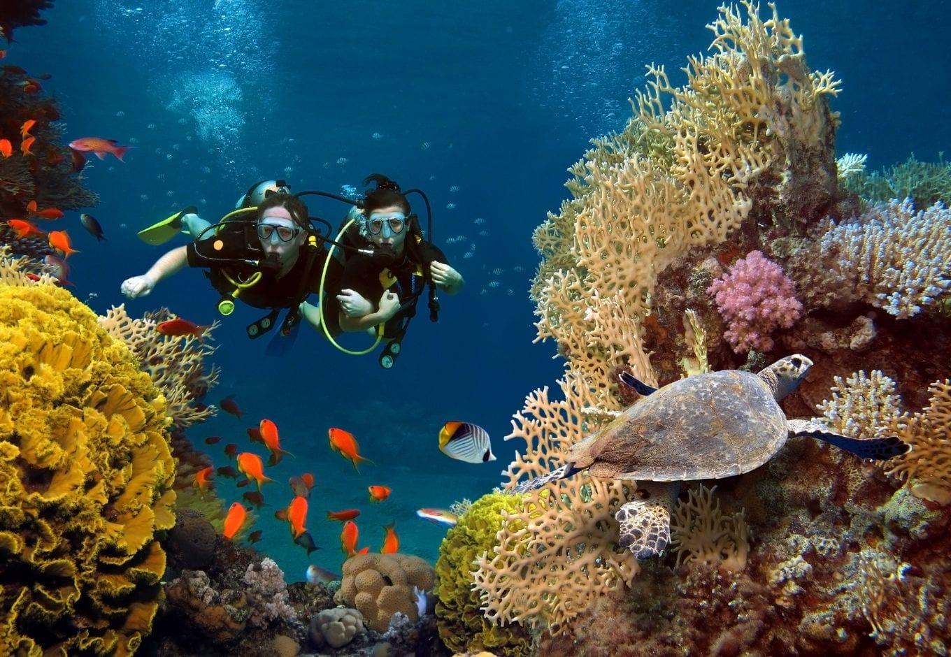 Two divers, a male and a female, under the ocean facing orange fishes, corals and a sea turtle.