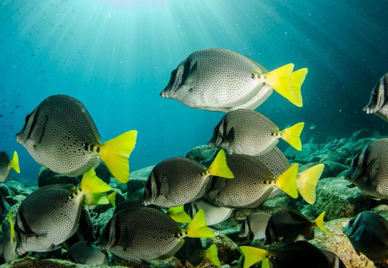 A school of fish swimming in the sea.