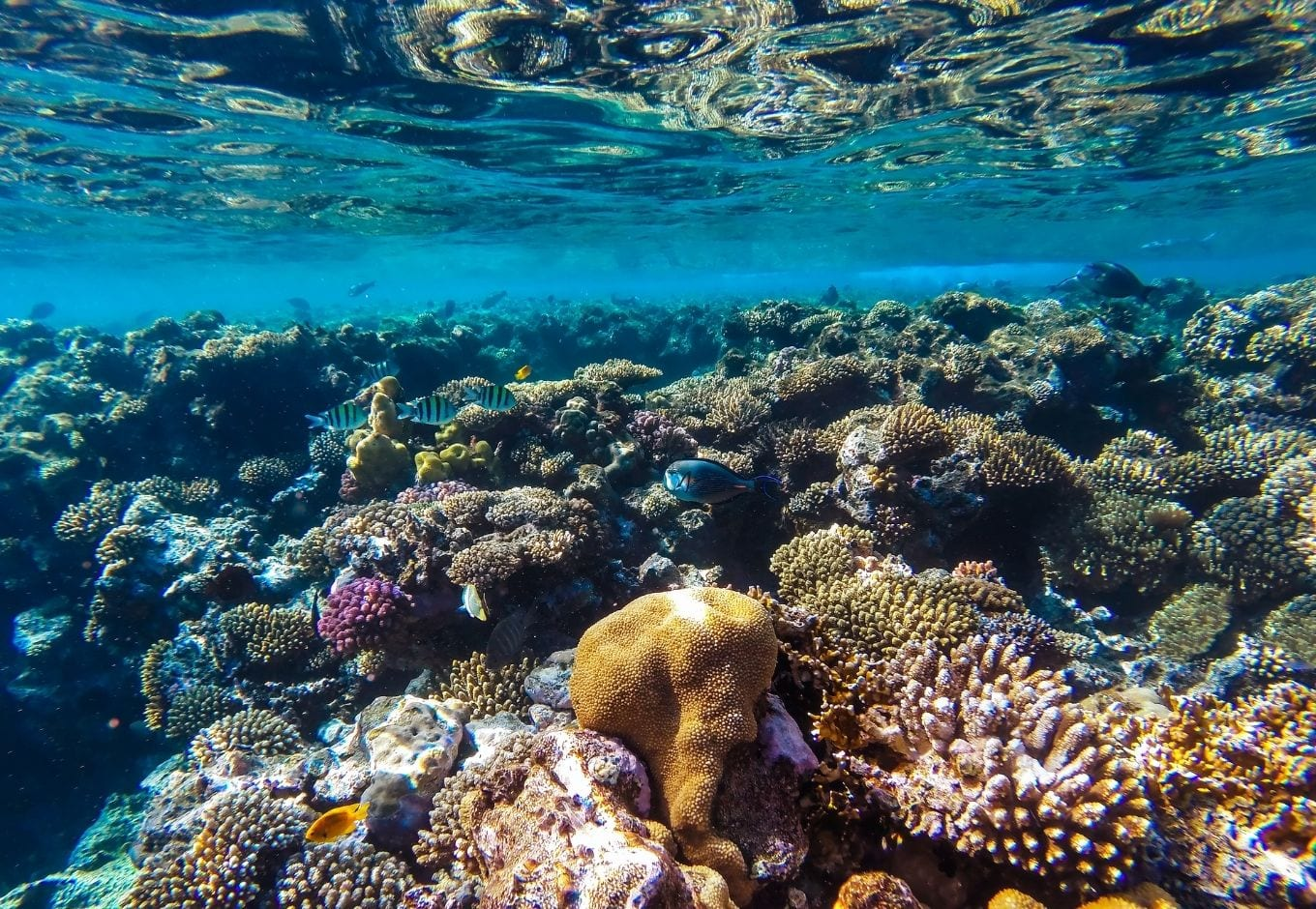 Underwater picture of corals and reefs.