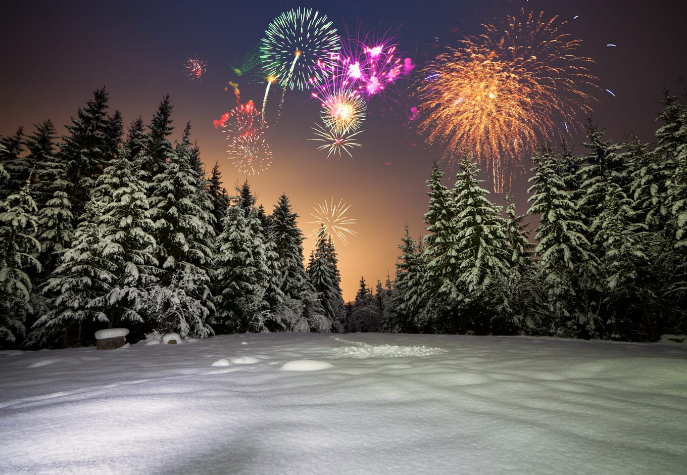 Winter night landscape wit colorful fireworks over a pine forest.