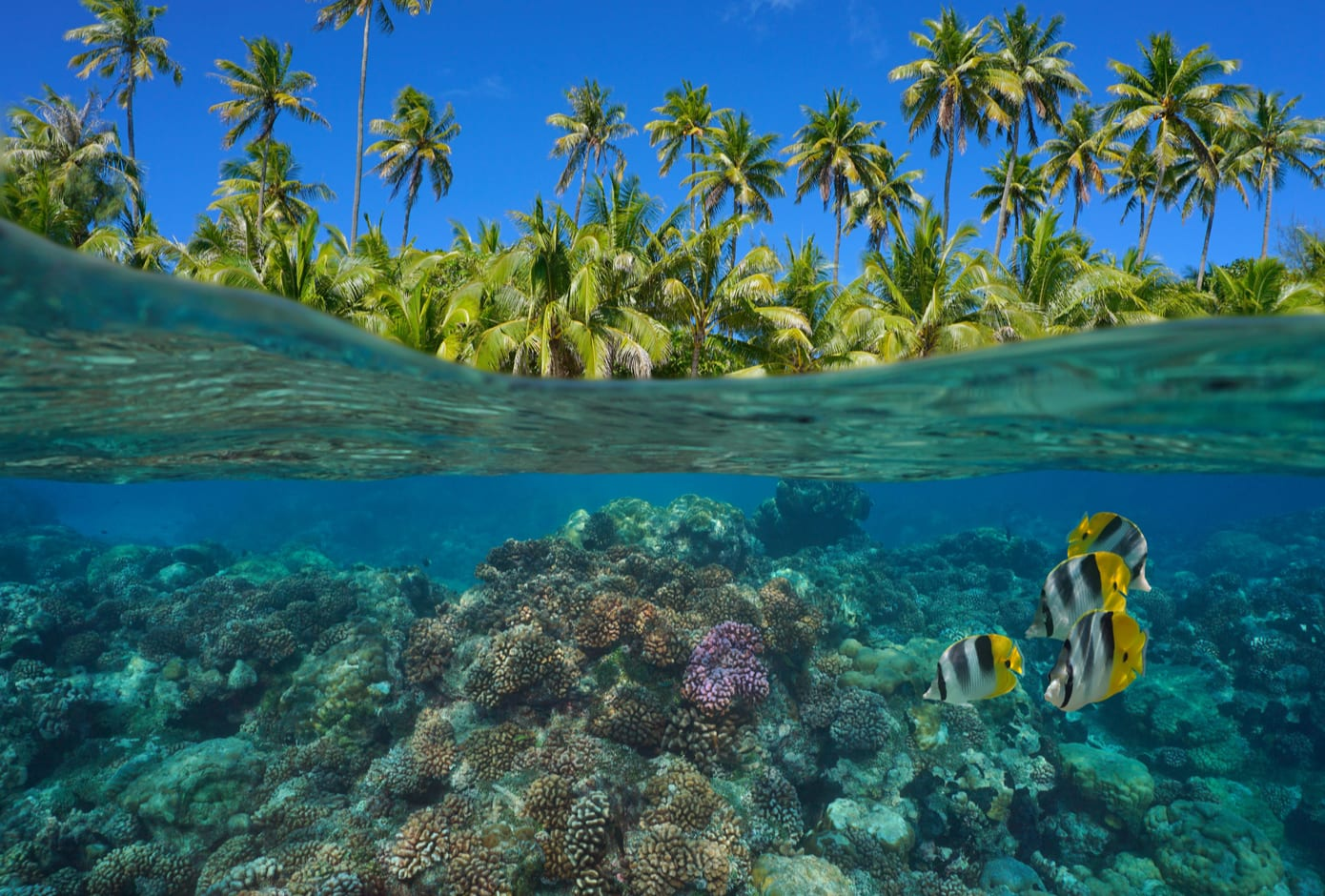 Coral reef with tropical fish underwater in French Polynesia, Pacific Ocean, Oceania