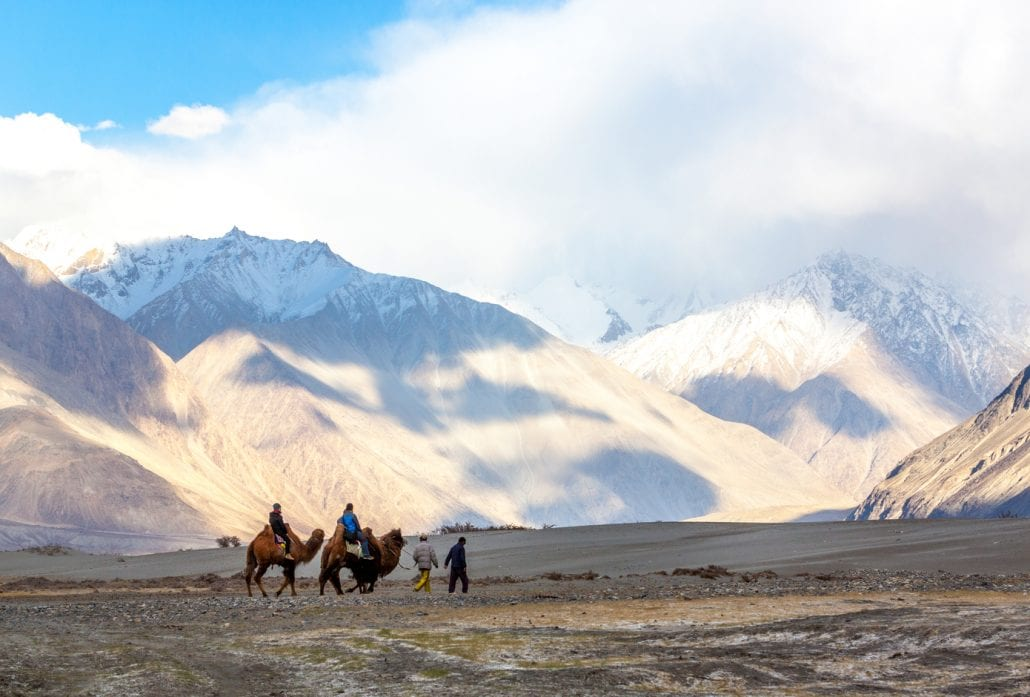 Caravan of people riding on camels in dusty Nubra valley dune with majestic mountain peaks background.